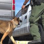 Border Patrol K-9s get back to work after coronavirus canceled classes