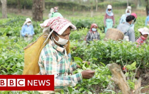 Coronavirus: The fears of India's tea workers in lockdown – BBC News